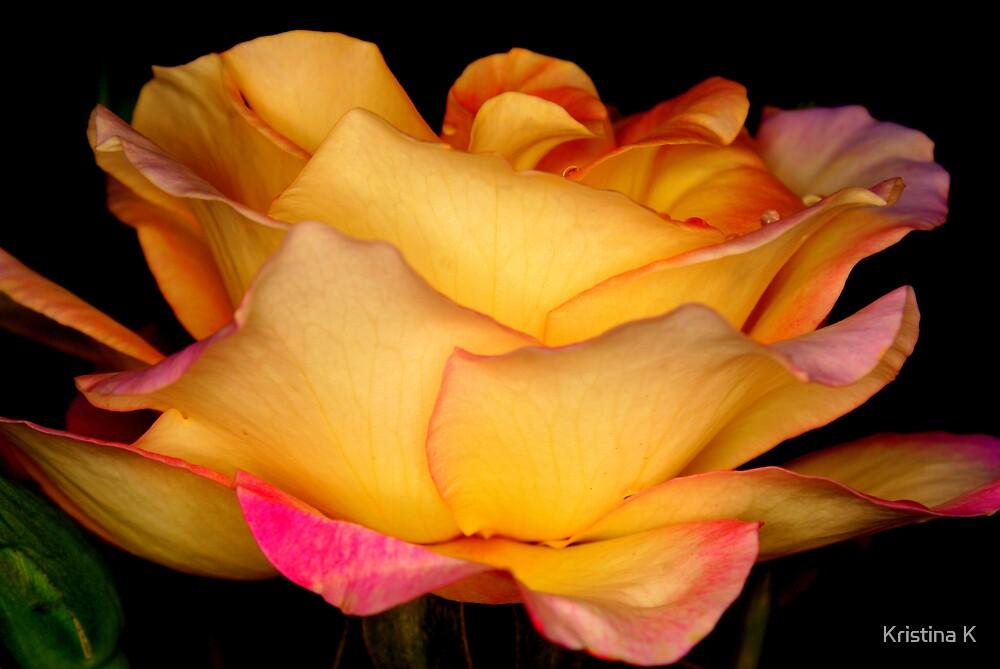 Morning Rose. by Kristina K