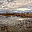Wetlands by CarolM
