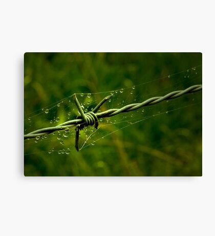 Beauty and the Barbed Wire Canvas Print