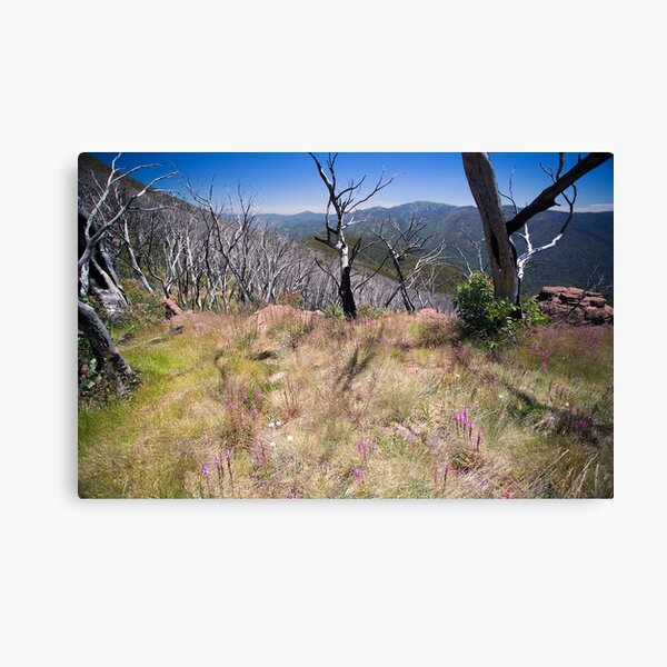 High Country Wild Flowers Canvas Print