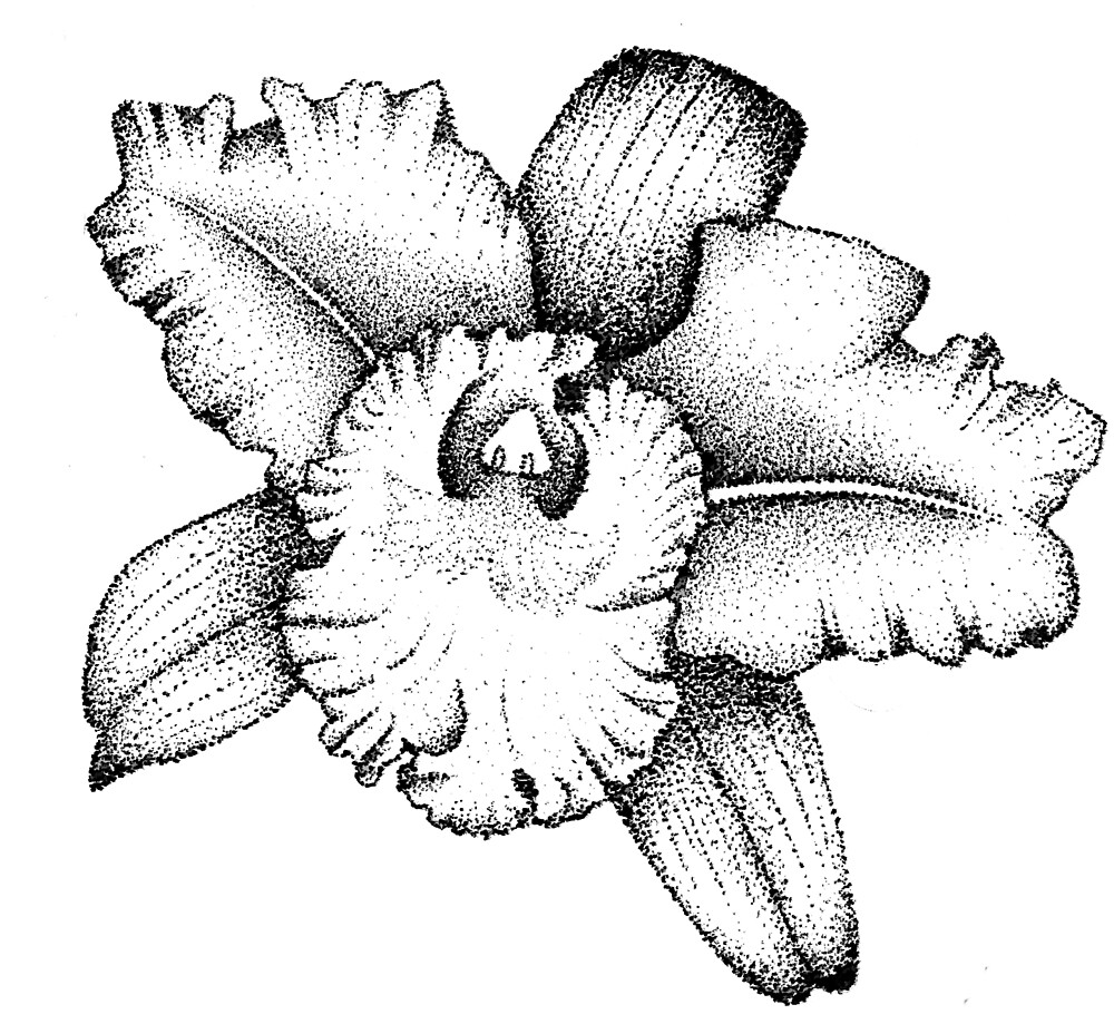 Pointillism Flowers Black And White