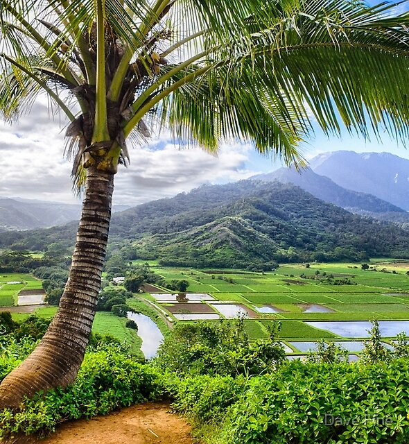 Tropical Palm Tree in Kauai, Hawaii  by Dave Fine