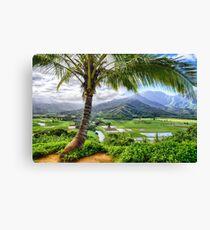 Tropical Palm Tree in Kauai, Hawaii  Canvas Print