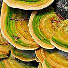 mushroom by nikonian