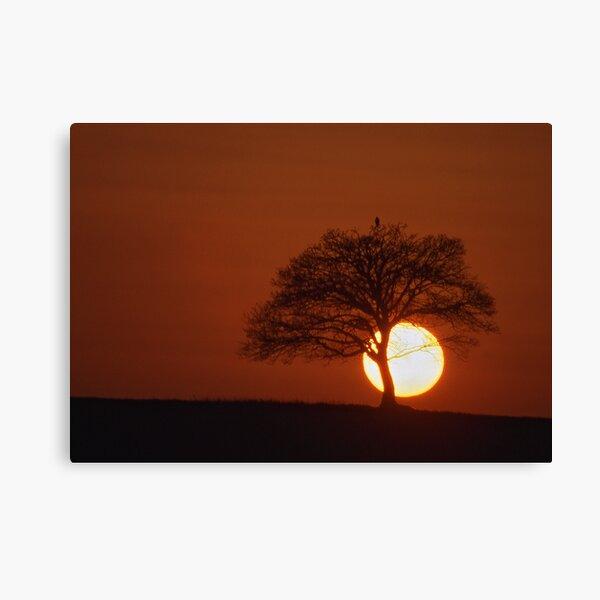 Tree at Sunset Canvas Print