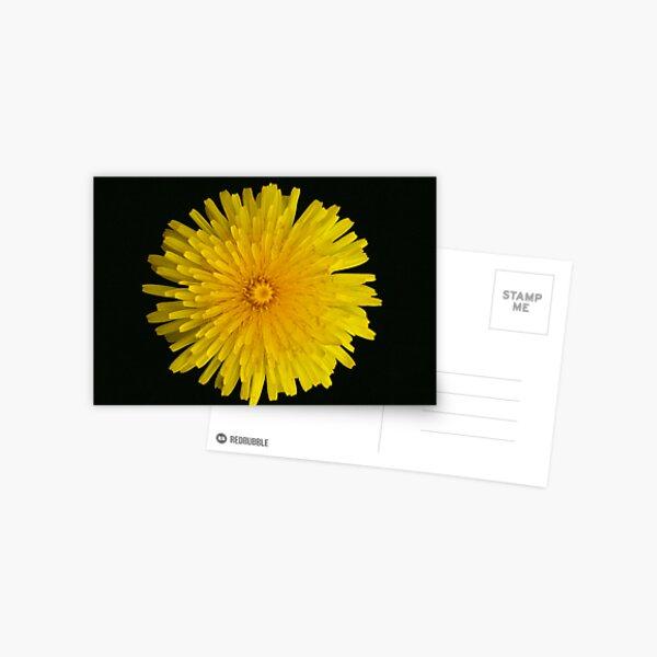 Dandelion (taraxacum officinale)  Postcard