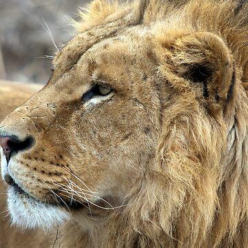 Profile Of A King by bobbymcleod