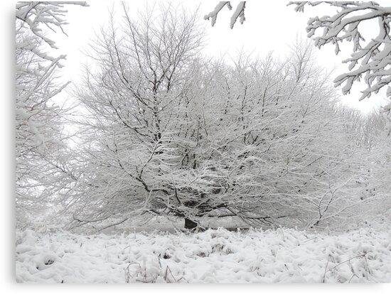 Frozen by Alexandra Lavizzari