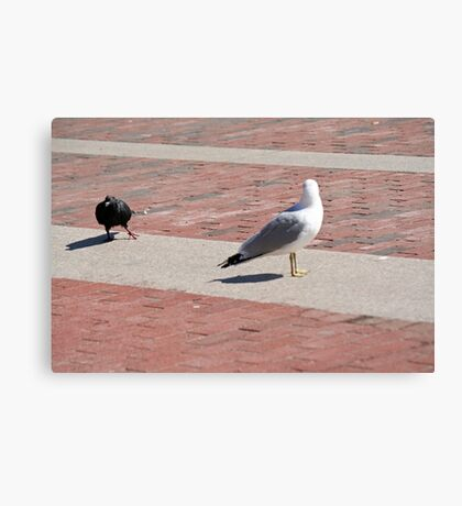 You're just not Goodfeather material, Gull, now scram! Canvas Print