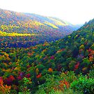 Autumn's Glory by George Cousins