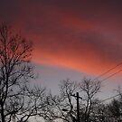 Cotton Candy Sky by Judi FitzPatrick