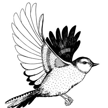 Flying Bird illustration Black and white by linnw