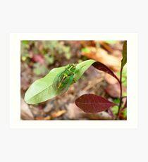 April Green Cicada - NZ Art Print