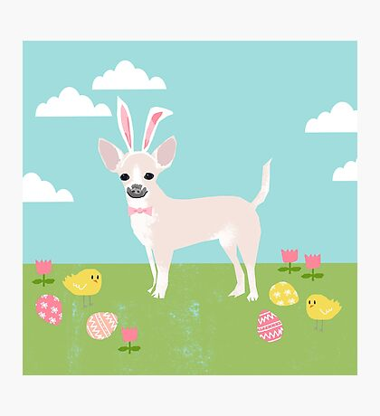 Chihuahua dog breed easter bunny costume pet portrait chihuahuas white coat Photographic Print