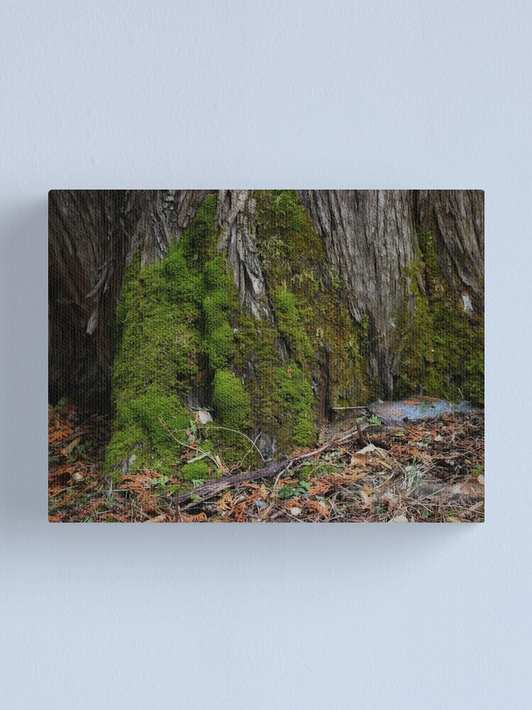 Alternate view of Spring's Promise Canvas Print