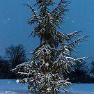 Fir Tree and snow by Mathieu Longvert