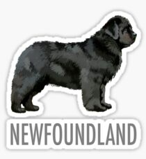 Newfoundland Dog Sticker
