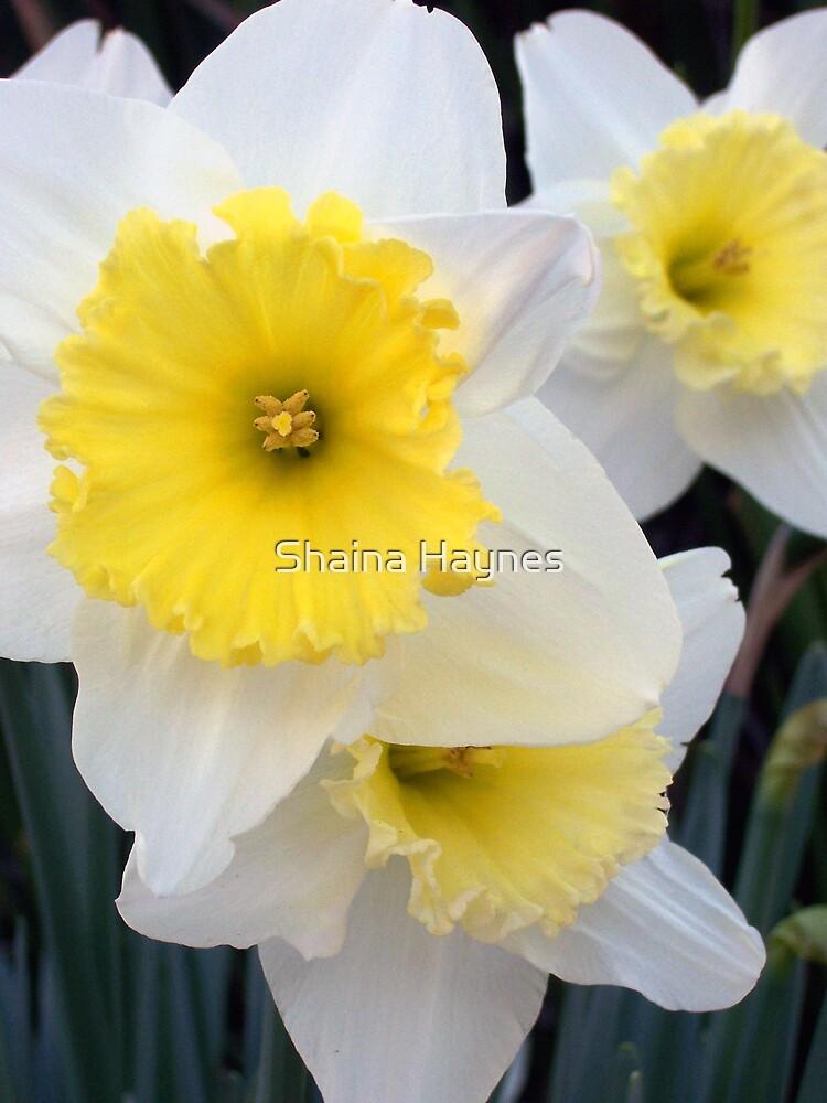Hello Sunshine by Shaina Haynes