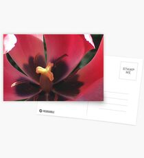 Eye of the Tulip Postcards
