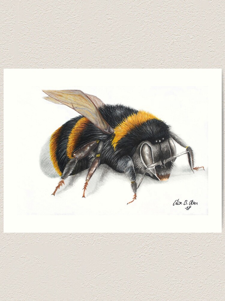 Alternate view of Bumble bee ink drawing Art Print