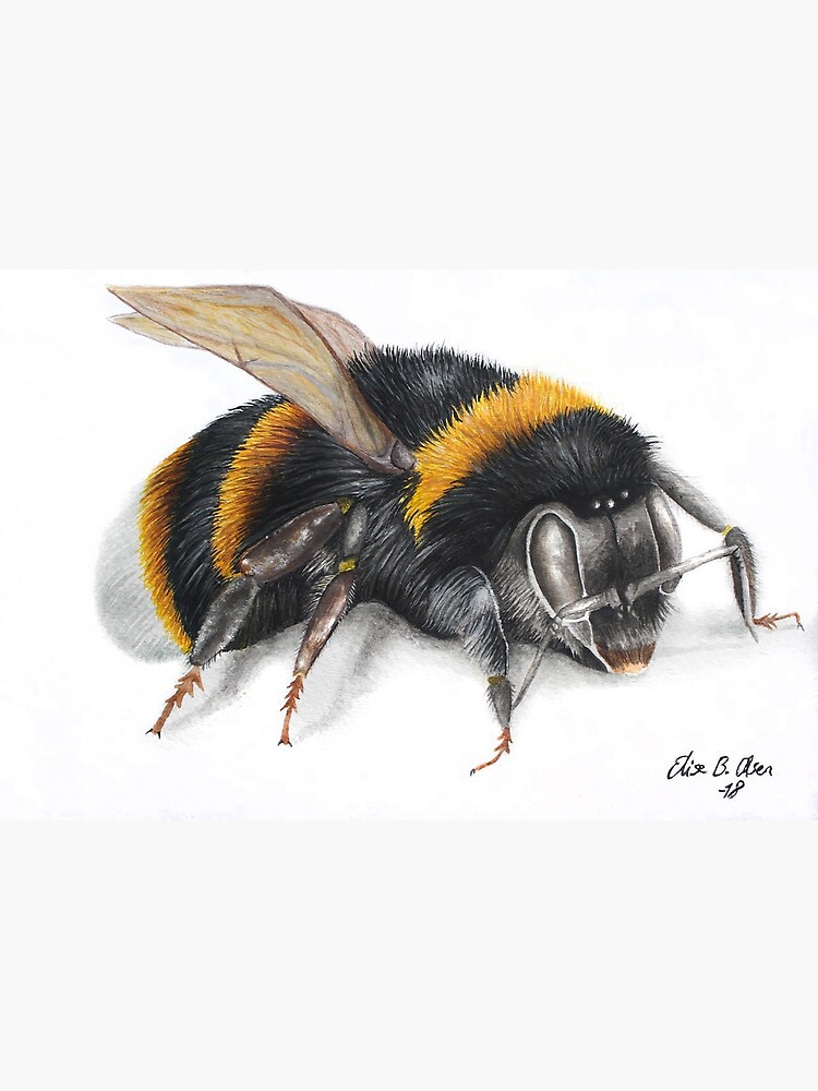 Bumble bee ink drawing by ElisesArtShop