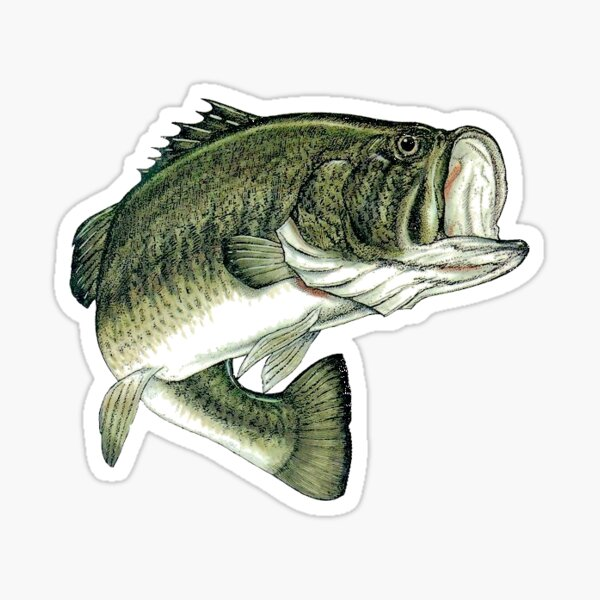 Largemouth Bass  Sticker