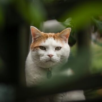 Cat Framed by Foliage by shane22