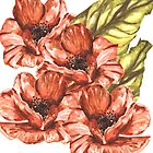 Watercolor Poppy Flowers by Erika Lancaster
