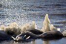 Ice Sculptures by Jo Nijenhuis
