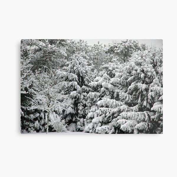 Snow at Rest Metal Print