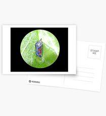 Royal Cradle Postcards