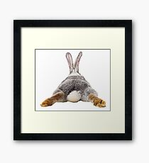 Cute Bunny Rabbit Tail Butt Image Picture  Framed Print