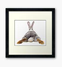 Cute Bunny Rabbit Schwanz Hintern Bild Bild Gerahmtes Wandbild