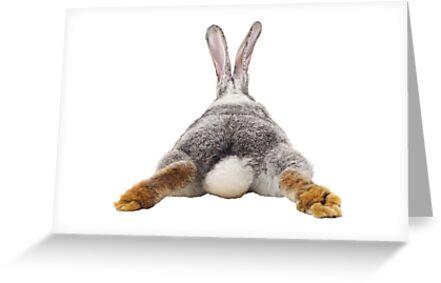 Cute Bunny Rabbit Schwanz Hintern Bild Bild von ColorFlowArt