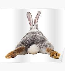 Cute Bunny Rabbit Schwanz Hintern Bild Bild Poster