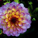 Flowers by Jamie Lee