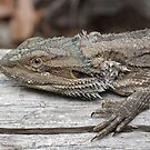 Bearded Dragon by Andrew Trevor-Jones