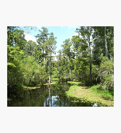Inside Lettuce Lake  Photographic Print