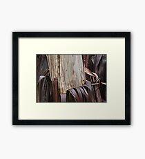 Eucalyptus Unclothed 3 Framed Print