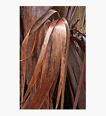 Eucalyptus Unclothed 4 Photographic Print
