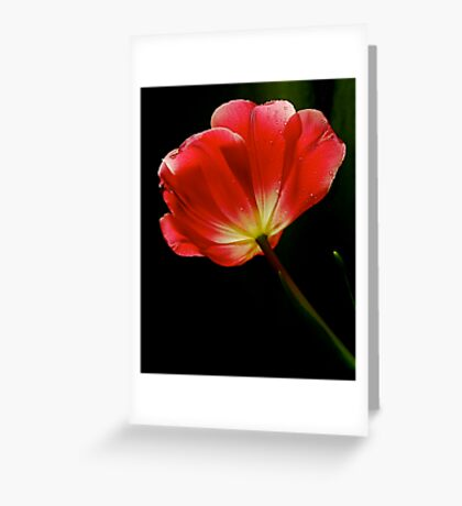 Vivid Light Greeting Card