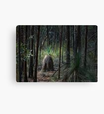 Conimbla Woodlands Leinwanddruck