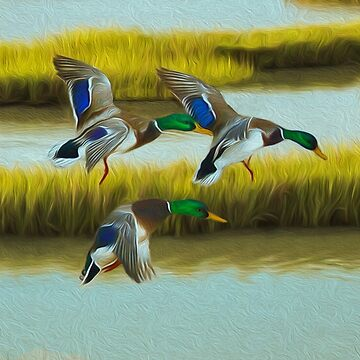 Marshland Mallard Ducks by Skyviper