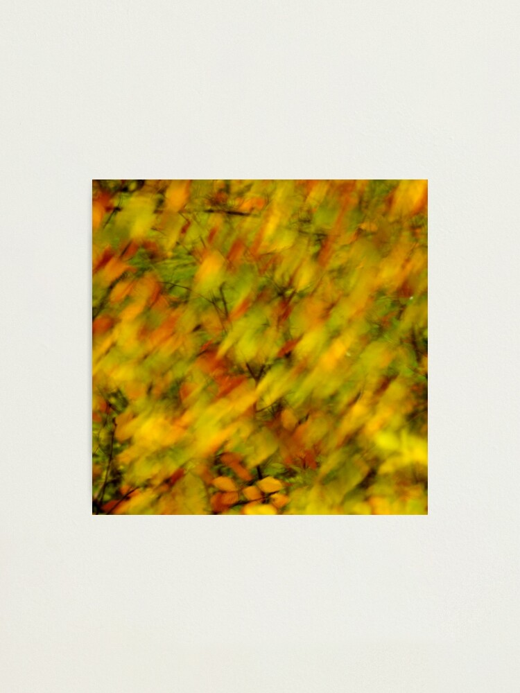 Alternate view of Autumn colors blown by the wind Photographic Print