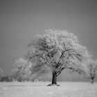 Frozen by Shellie Hill