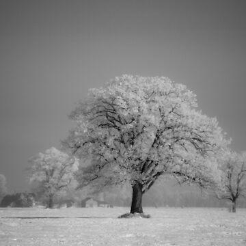 Frozen by Hillse