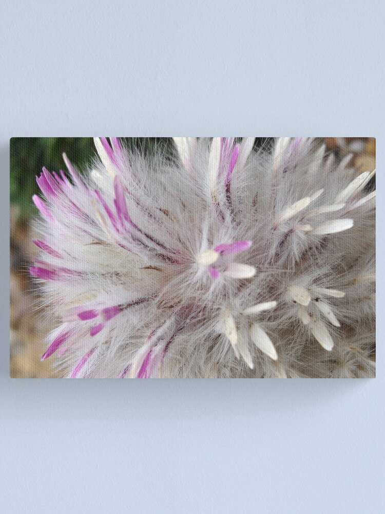 Alternate view of Gracious Fluffiness Canvas Print