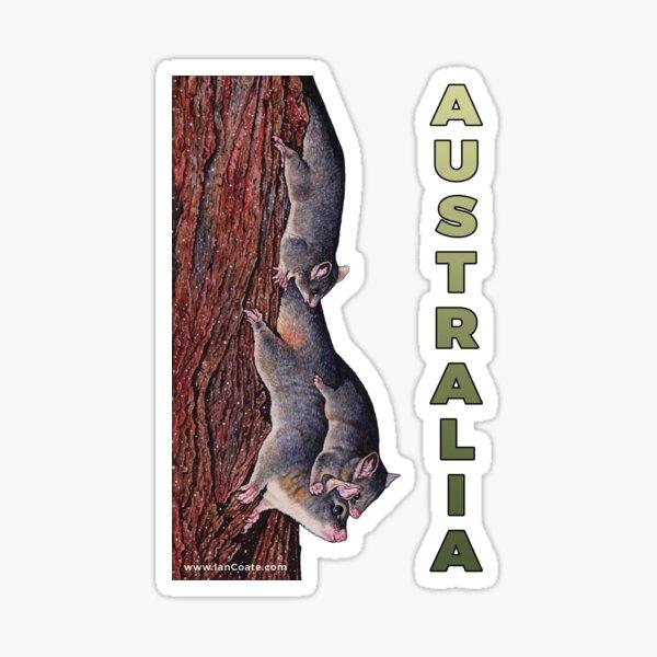 Australian Possum Sticker