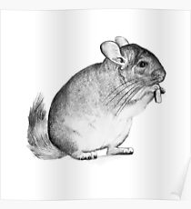 chinchilla,drawing, pencil ,sketch Poster