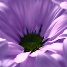 Purple Flower Macro Photo  by hurmerinta